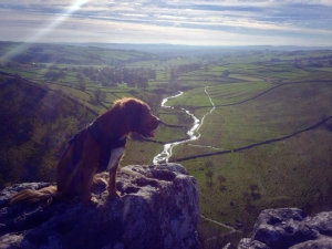 Our Wookie at the top of Malham Cove.